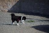 Black & White Pup