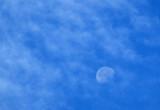 Mr.Moon, Mr. Moon