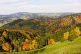 Fall Colours in Black Forest