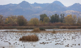 Graylodge, the Sutter Buttes and a Few Wigeon