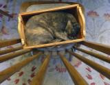 Paw-parazzi Cats
