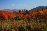 Foliage along the Kancamagus Scenic Highway