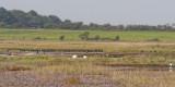 the birds preening or skulking on the marsh