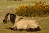 a rest from grazing