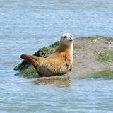 dry seal