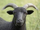 We have black sheep!