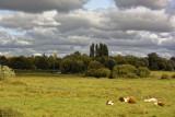 Woodbridge water meadows - 2