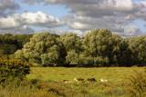 Woodbridge water meadows - 1