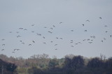 Curlew club flyabout