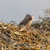 visitor on foreshore...