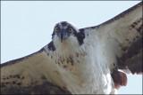 Palo Alto Birding Class 2013