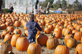 In Search of the Great Pumpkin
