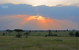 Sunset Serengeti