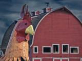 Psycho Chicken