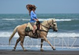 Horses on back beach new plymouth