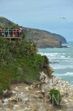 Gannet breeding colony Murawai beach