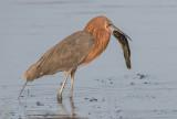 transient_birds