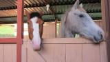 Horses_001.JPG