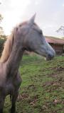 gaia_and_the_horses