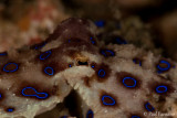 Underwater Indonesia