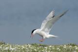 Seagulls / Meeuwen