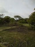 Tanji Bird Reserve
