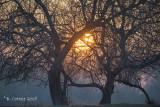 Zonsopkomst - Sunrise