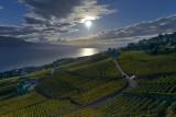 Vineyards over Lake Leman (Lake Geneva)
