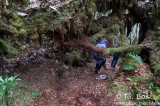 Mossy _Forest.jpg