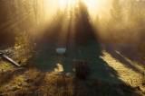 #Magic garden in first #light, Sweden.