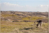 Zandvoort 2014 krokusvakantie