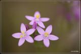 wilde planten (wild plants)