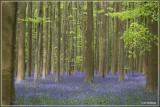 natuur in Belgie (Nature in Belgium)