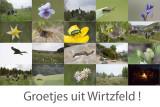 Wirtzfeld 2015