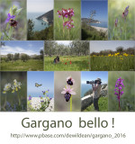 Gargano 2016