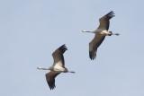 2013-10-31 diepholz kraanvogel 4 fb.jpg