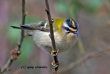 a few birds from devon in the west country