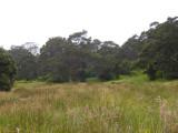 Hakalau Forests NWR