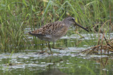 Delta Wind Birds Shorebird ID day at Ensley