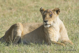 Lions & Vultures - 03 Jul 2013