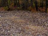 Vernal with rainwater