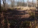 Dry vernal in woods