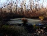 Wet vernal in partial woods