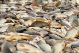 Fishes ribe_MG_9480-11.jpg