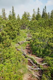 Coniferous forest iglast gozd_MG_6774-11.jpg