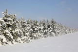 WInter zima_MG_0315-111.jpg