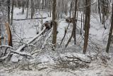 Fallen trees due sleet padla drevesa zaradi žledu_MG_0476-111.jpg