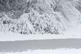 Snow sneg_MG_1050-111.jpg