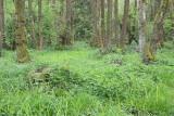 Alder swamp forest poplavni gozd črne jelše_MG_3402-111.jpg