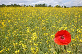 fields_meadows_vineyards